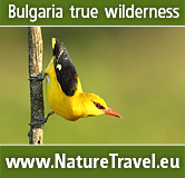 Birdwatching and Wildlife Photography Tours in BULGARIA. Cottage to rent