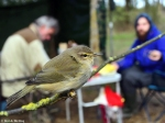 Durankulak Bird Ringing Camp - call for volunteers
