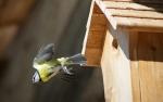 Novelty nest boxes putting garden birds at risk, warns RSPB