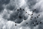 How do hurricanes affect birds?