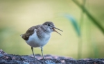 Climate Change Leaves Bird Species With Uncertain Futures