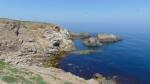 Най-редкият вид корморан в България увеличава числеността си