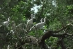 Eurasian Spoonbill/Platalea leucorodia - Cameraman: Любомир Андреев - Лу_пи